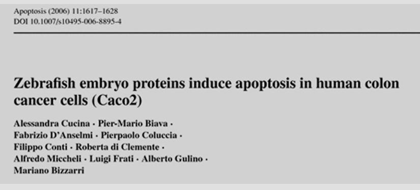 Alcune proteine embrionali di zebrafish inducono apoptosi nelle cellule del cancro al colon umane (caco2)