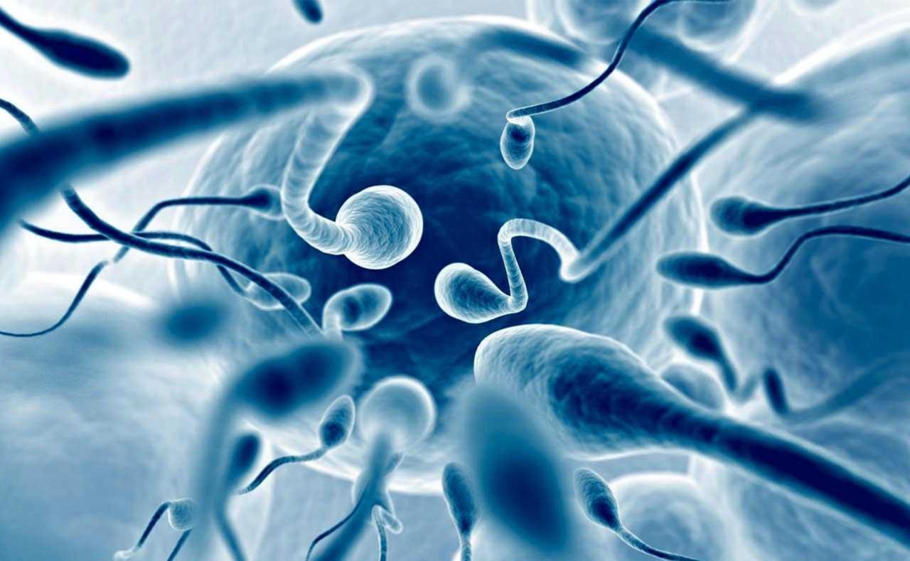 Spermatozoi armati per combattere i tumori femminili