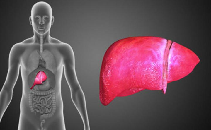Tumore al fegato: i benefici del coenzima Q10