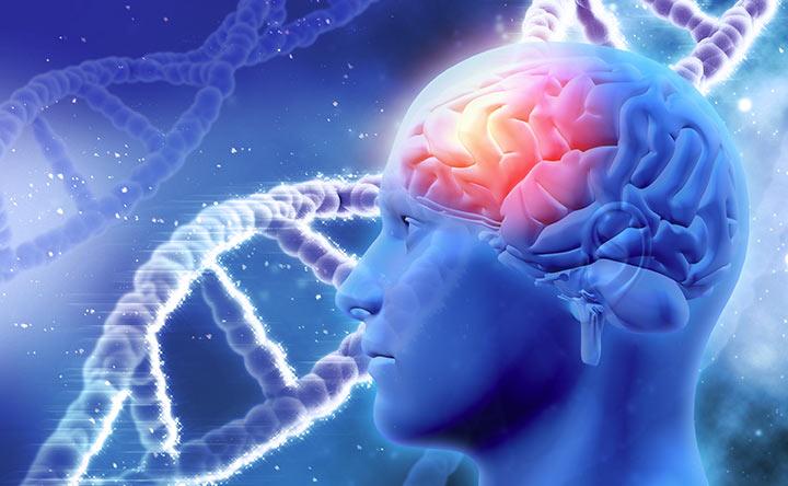 Glioblastoma, nuove ricerche per la cura: affamare di grassi le cellule e stimolare la loro reversione