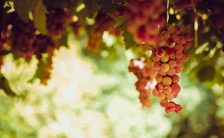 Cancro alla prostata: bucce di mela, uva rossa e curcuma sono valide alleate