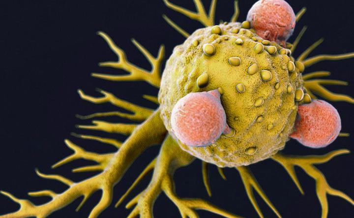 Un particolare virus può indurre risposte immunitarie contro il cancro?