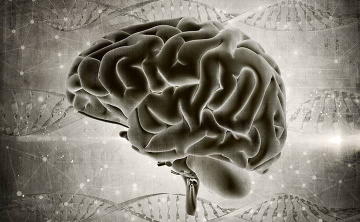 L'assenza di una proteina può fermare il tumore al cervello?