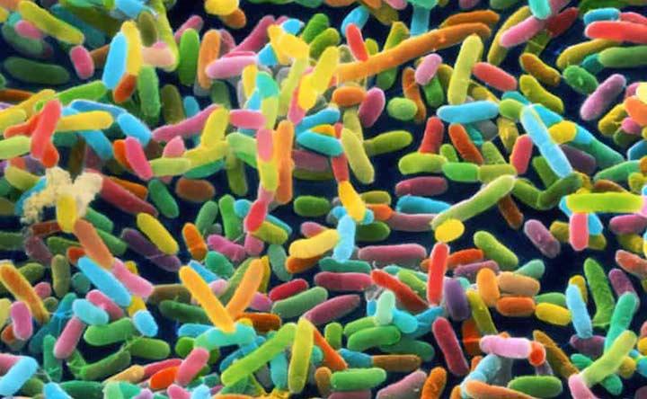 Immunoterapia e intestino: c'è un collegamento?